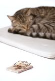 Isolated cat relaxingwith trap. Isolated cat relaxing on white Royalty Free Stock Photo