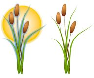 Isolated Cattails Clip Art. A clip art illustration of your choice of 2 isolated cattails, one in plain, and one with the sun behind it. Sorry, no extra formats Stock Image