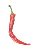 Isolated Cayenne Pepper Royalty Free Stock Photo