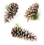 Isolated cedar cone Stock Image