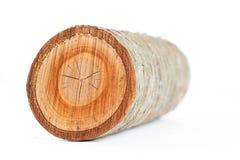 Isolated cherry tree round log. On white background royalty free stock image