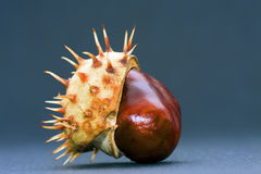 Isolated chestnut Stock Photo