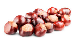 Isolated Chestnut. On white background. Clipping Path stock photo