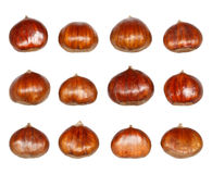 Isolated Chestnuts Royalty Free Stock Photography