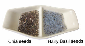 Free Isolated Chia Seeds And Hairy Basil Seeds After Put In The Water On White Background Royalty Free Stock Photography - 95348317