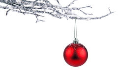 Isolated christmas branch Stock Photo