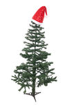 An isolated Christmas tree Stock Images