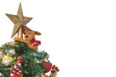 Isolated, Christmas Tree Stock Photography