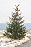 Isolated christmas tree in rural Scotland with baubles and tinsel Stock Photo