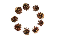 Isolated circle of pine cones. On a white background stock photos