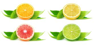 Isolated citrus fruit halves royalty free stock images
