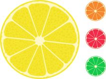 Isolated citrus fruit lemon lime orange grapefruit Royalty Free Stock Photo
