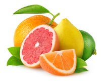 Isolated citrus fruits Royalty Free Stock Photos
