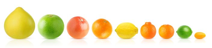 Citrus fruits in a row royalty free stock photo
