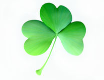 Isolated Clover Leaf in 3D Royalty Free Stock Images