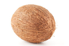 Isolated coconut Stock Photography