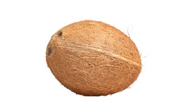 Isolated coconut Stock Image