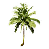 Isolated coconut tree. vector logo design. natural plant Royalty Free Stock Photography