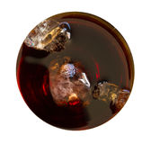 Isolated cola drink top view with no glass Stock Photo