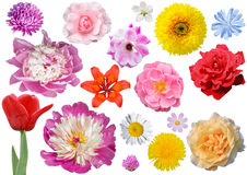 Isolated collection of flowers. Flower heads isolated on white background royalty free stock image