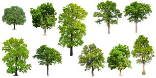 Isolated collection tree on white background royalty free stock photography