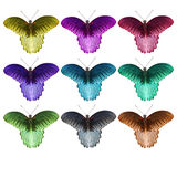 Isolated coloful great mormon butterfly Stock Photos