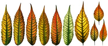 Isolated color leaves Royalty Free Stock Image