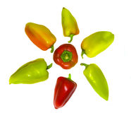 Isolated color sweet peppers lie like a sun. Stock Photo