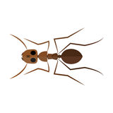 Isolated colored ant. Isolated ant on a white background,  illustration Royalty Free Stock Photo