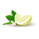 Isolated colored yellow slice of juicy pomelo with green leaves, white flower and shadow on white background. Realistic wedge citr. Us fruit Royalty Free Stock Photos