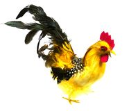 An isolated colorful artificial cock Royalty Free Stock Images