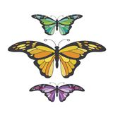 Isolated colorful butterfly variations vector drawing royalty free illustration