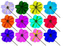 Isolated colorful cosmos flower Stock Photos
