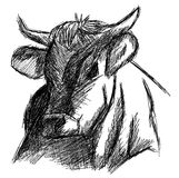 Isolated colorful head of cow Stock Photography