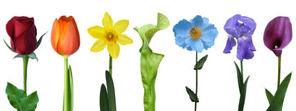 Isolated colorful rainbow of flowers cover photo Stock Photography