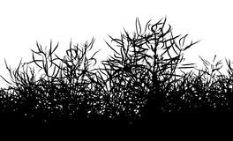 Isolated colza silhouette background - herbs background. Black and White background of colza plants stock illustration