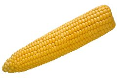 Isolated corn Stock Image