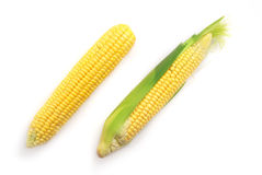 Isolated corn Stock Photos