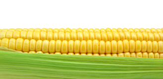 Isolated corn Royalty Free Stock Photo