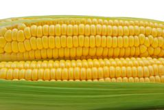 Isolated corn Stock Images