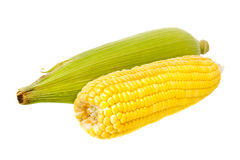 Isolated of corn Royalty Free Stock Photo