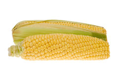 Isolated corn Stock Photos