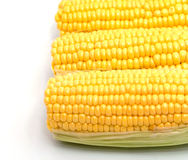 Isolated corn on the cob with husk Stock Image
