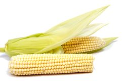 Isolated corn. One ear of sweet corn with leaves isolated on white background Royalty Free Stock Photos