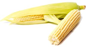 Isolated corn. One ear of sweet corn with leaves isolated on white background Stock Image