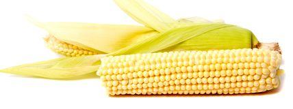 Isolated corn. One ear of sweet corn with leaves isolated on white background Royalty Free Stock Photo