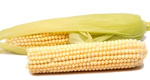 Isolated corn. One ear of sweet corn with leaves isolated on white background Royalty Free Stock Photography