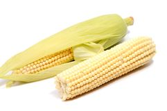 Isolated corn. One ear of sweet corn with leaves isolated on white background Stock Photo