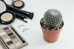 Isolated cosmetic product, powder, brush, eyelash and cactus on. White background with copy space. image for beauty, business, feminine, ornamental, makeup Stock Photo