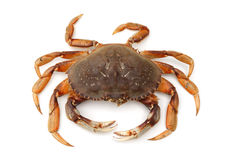Isolated crab Stock Photography